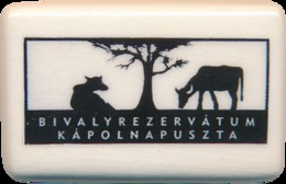 Bivalyrezervatum Kapolnapuszta (HU) - Buffalo - Animals & Fauna
