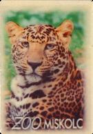 ZOO Miskolc (HU) - Leopard - Animaux & Faune