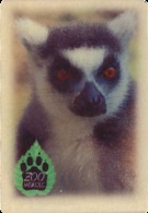 ZOO Miskolc (HU) - Ring-tailed Lemur - Animaux & Faune