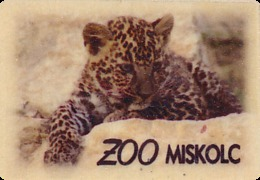 ZOO Miskolc (HU) - Baby Leopard - Animaux & Faune