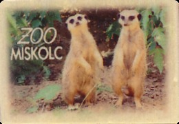 ZOO Miskolc (HU) - Meerkat - Animaux & Faune