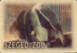 ZOO Szeged (HU) - Anteater - Animals & Fauna
