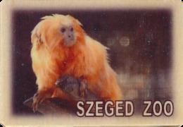 ZOO Szeged (HU) - Golden Lion Tamarin - Animals & Fauna