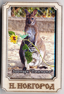 ZOO Limpopo Nizhniy Novgorod (RU) - Wallaby - Animals & Fauna