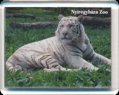 Sosto Zoo Nyiregyhaza (HU) - White Tiger - Animaux & Faune
