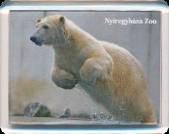 Sosto Zoo Nyiregyhaza (HU) - Polar Bear - Animals & Fauna