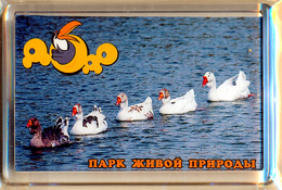 """Park Of Living Nature """"Dodo"""" Anapa (RU) - Geese - Animaux & Faune"""