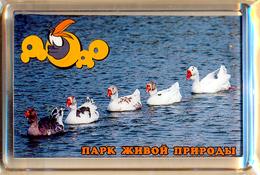 "Park Of Living Nature ""Dodo"" Anapa (RU) - Geese - Animals & Fauna"
