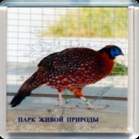 "Park Of Living Nature ""Dodo"" Anapa (RU) - Tragopan - Animaux & Faune"