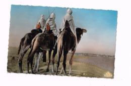 Groupe De Touaregs. - Algérie