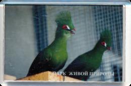 "Park Of Living Nature ""Dodo"" Anapa (RU) - Turaco - Animaux & Faune"