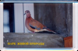 """Park Of Living Nature """"Dodo"""" Anapa (RU) - Pigeon - Animaux & Faune"""