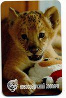 ZOO Novosibirsk (RU) - Baby Lion - Animaux & Faune