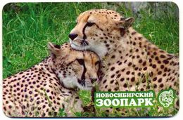 ZOO Novosibirsk (RU) - Cheetah - Animaux & Faune