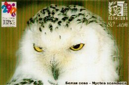 ZOO Perm (RU) - Snwy Owl - 3D Magnet - Animals & Fauna