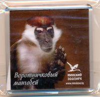 ZOO Minsk (BY) - Mangabey - Animals & Fauna