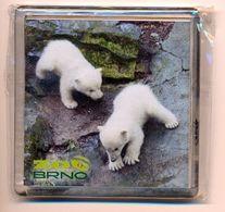 ZOO Brno (CZ) - Baby Polar Bear - Animaux & Faune