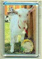 ZOO Izhevsk (RU) - Goat - Animaux & Faune