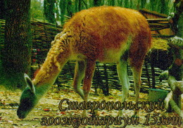 Zooexotarium Stavropol (RU) - Lama - Animals & Fauna