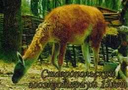 Zooexotarium Stavropol (RU) - Lama - Animaux & Faune