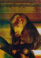 Zooexotarium Stavropol (RU) - Macaque - Animaux & Faune