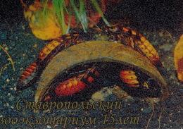 Zooexotarium Stavropol (RU) - Cockroaches - Animaux & Faune
