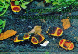 Zooexotarium Stavropol (RU) - Bun Beetle - Animaux & Faune