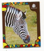 ZOO Izhevsk (RU) - Zebra - Animaux & Faune