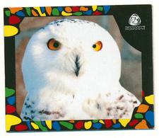 ZOO Izhevsk (RU) - Snowy Owl - Animaux & Faune