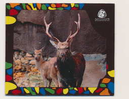 ZOO Izhevsk (RU) - Deer - Animals & Fauna