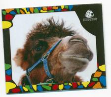 ZOO Izhevsk (RU) - Camel - Animaux & Faune