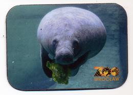 ZOO Wroclaw (PL) - Manatee - Animals & Fauna