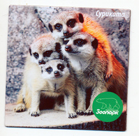 ZOO Leningrad (RU) - Meerkat - Animals & Fauna