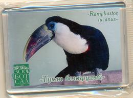 Zoo-botanical Garden Kazan (RU) - Toucan - Animals & Fauna