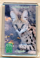 Zoo-botanical Garden Kazan (RU) - Serval - Animaux & Faune