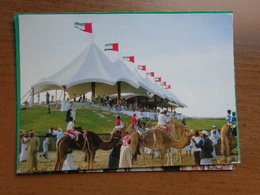 Kameel, Camel / Camel Racing In United Arab Emirates --> Unwritten - Animaux & Faune