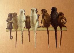 CHROMO DECOUPI GROUPE DE SINGES   15 / 9 Cm - Animals