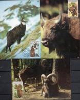 Set Maxikarten Slowakei - Gämse, Wisent, Mufflon - Wild
