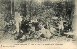 Gouropan - Côte D'ivoire - Arbre Fétiche - Thème Fétichisme Sorcier Vaudou Sorcelerie - AA54 - Ivory Coast