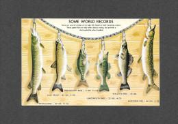 ANIMAUX - ANIMALS - POISSONS - SOME WORLD RECORDS - CANADIAN RECORDS - QUELQUES RECORDS DU MONDE - Poissons Et Crustacés