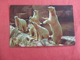 Arctic Polar Bears     Brookfield Zoo Ref 3035 - Bears
