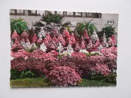 GENTSE FLORALIEN 1950 - Photo Véritable, Officiële Postkaart Bromolux -- NO  REPRO - Gent