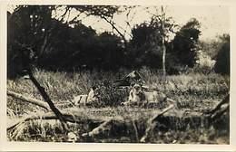 Pays Div : Ref M294 - Carte Photo -lions - Monbasa - Carte Bon Etat - - Lions