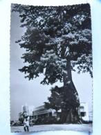 CP - CONGO - BRAZZAVILLE - L'arbre De BRAZZA Et La Douane - Brazzaville