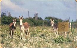 Antilles (Neth) - Bonaire, Telefonia Bonairano, Donkeys, 20 Units, GEM1B (Not Symmetric White/Gold),1999, Used - Antilles (Netherlands)