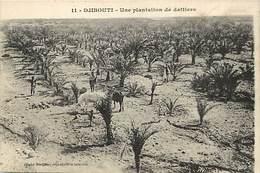 Pays Div : Ref M230- Afrique -  Djibouti - Une Plantation De Dattiers - Dattes  - Carte Bon Etat - - Djibouti