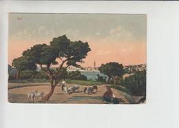 Arbe Rab Written Back Postcard (st427) - Croatia