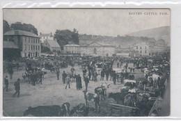 Bantry. Cattle Fair - Cork