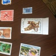 HAITI UCCELLI NOTTURNI - Stamps