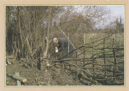 TRADITIONAL CRAFTS - HEDGE LAYING . MODERN - Agriculture